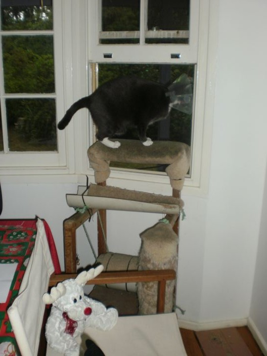 Freya on top of the world - or at least her favourite viewing platform