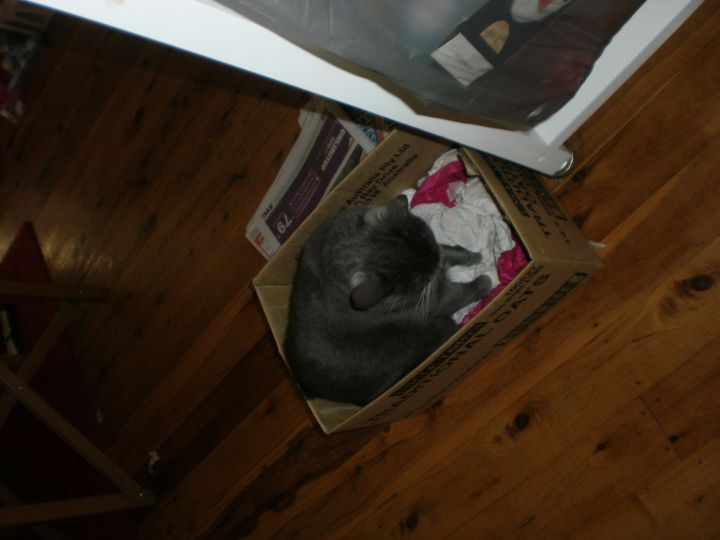 Freya trying her box on for size
