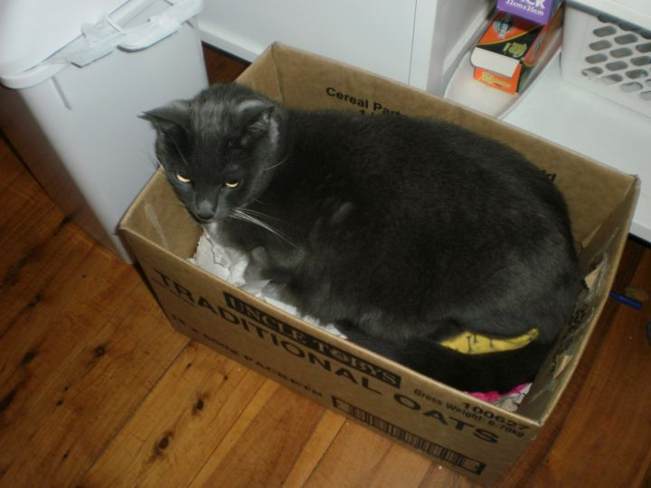 Freya at home in a favourite box