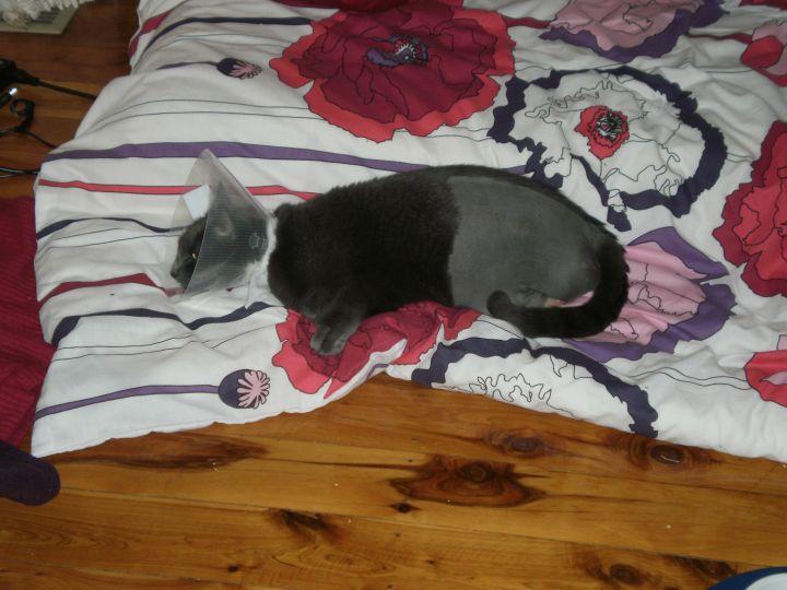 Freya at home after surgery