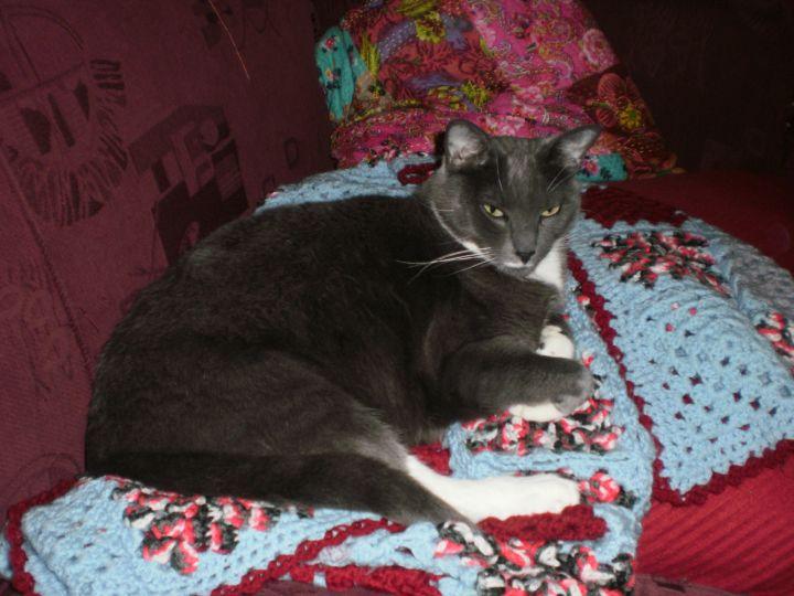 Freya - feline of leisure on Day 9 AA